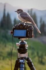 A bird on my camera :)