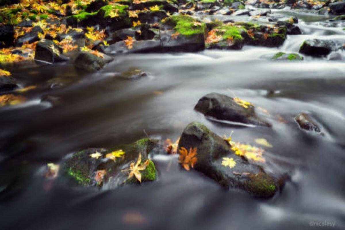 Cedar Creek (Washington State)
