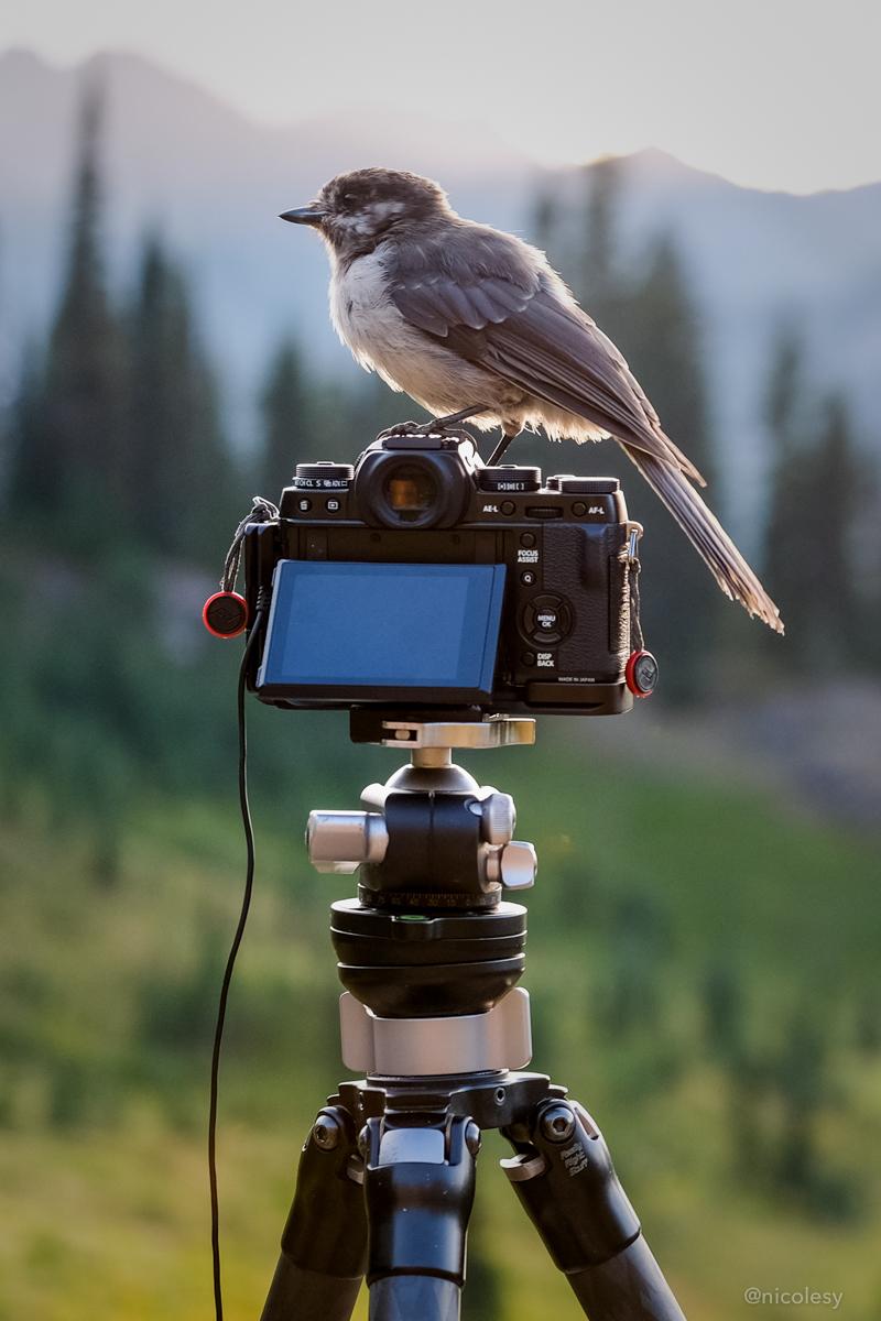 Bird Photography (Tipsoo Lake, Mount Rainier, WA)