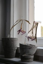 Dried tulips for inspiration