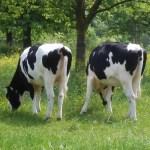 Waarom eten Nederlanders minder vlees?