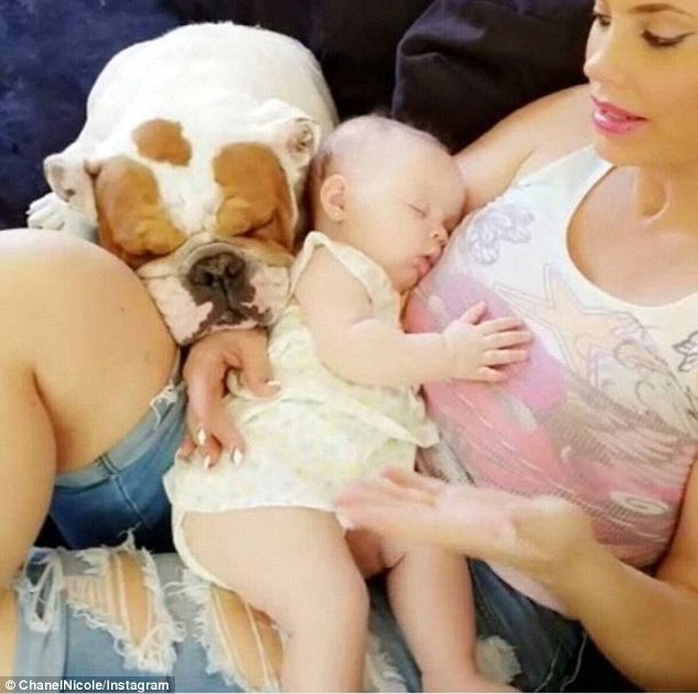 Coco Austin Cancels Daughters First Birthday After Her Dog Spartacus Passes Away