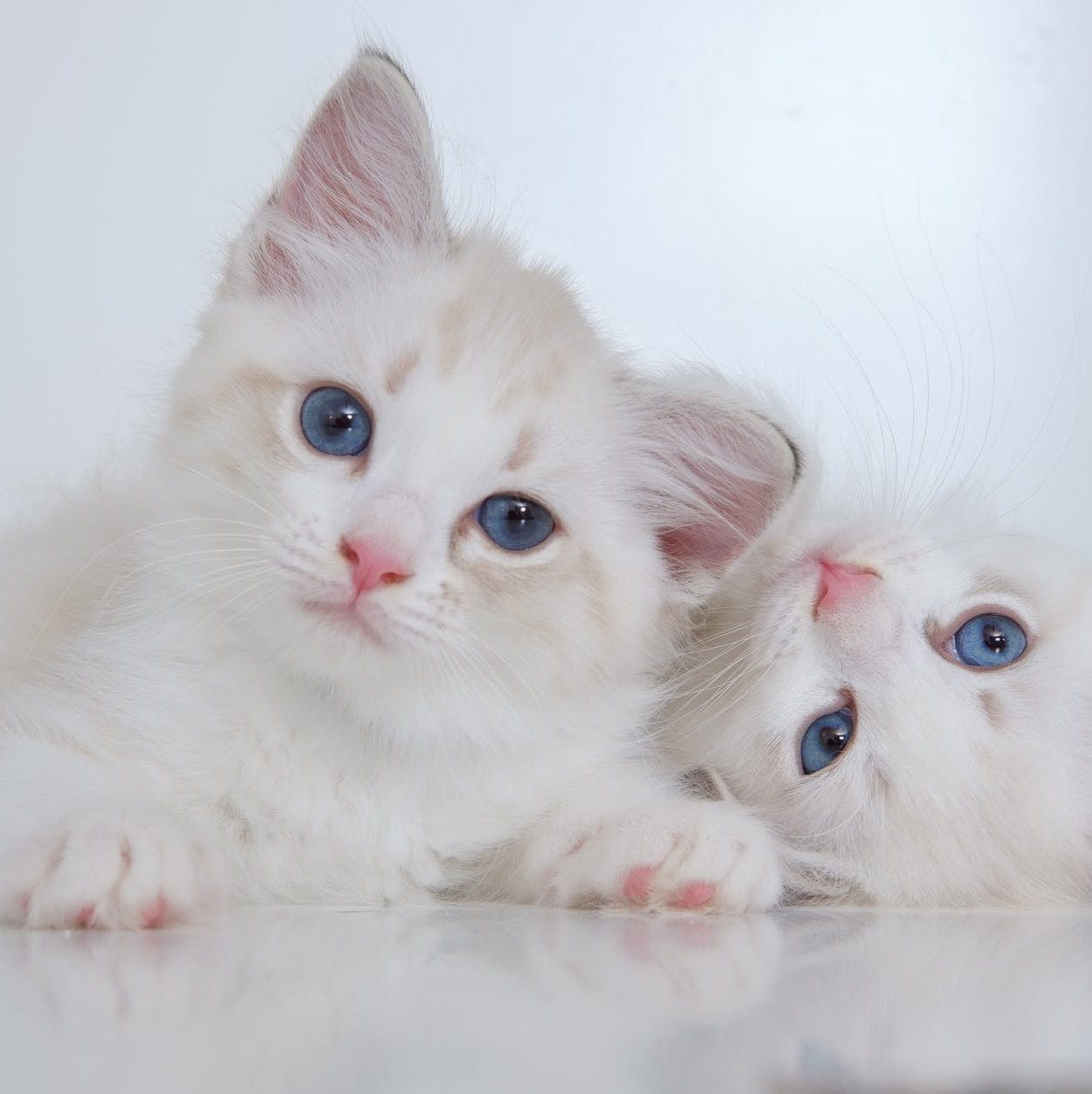adorable kittens looking at camera