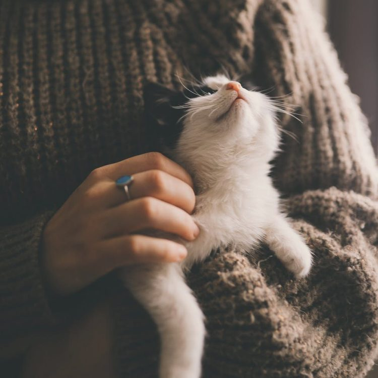 person in brown sweater holding white cat
