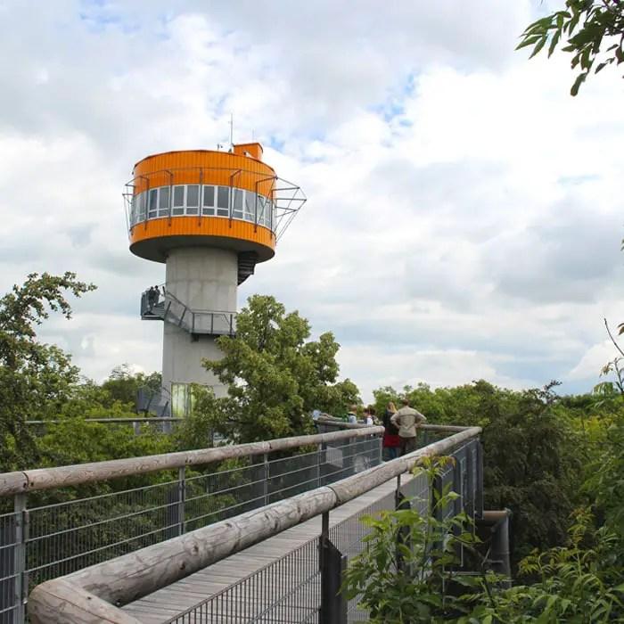 sehenswuerdigkeiten-muehlhausen-Unstrut-Hainich--thueringen-reisetipps-deutschland-unesco-welterbe-nationalpark-hainich-baumkronenpfad-aussichtsturm
