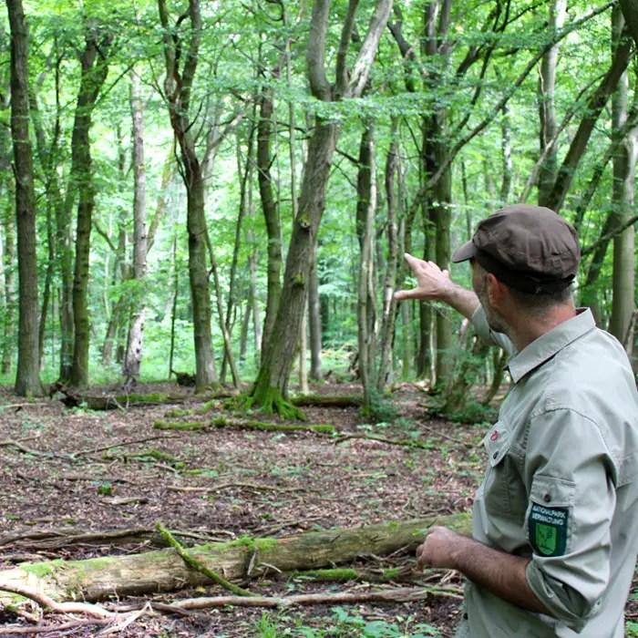 sehenswuerdigkeiten-muehlhausen-Unstrut-Hainich--thueringen-reisetipps-deutschland-unesco-welterbe-nationalpark-hainich-revierleiter-Jens-Wilhelm