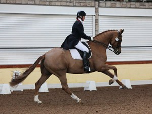 Carolyn Mellor on VSH Florenciano at the Winter Finals