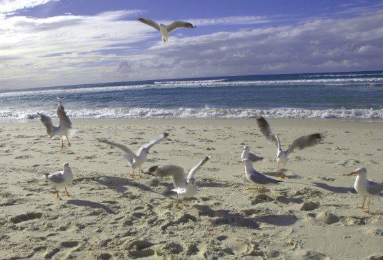 Mewy Gold Coast Australia