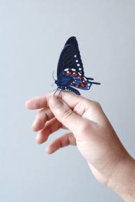 dianabeltranherrera-butterfly