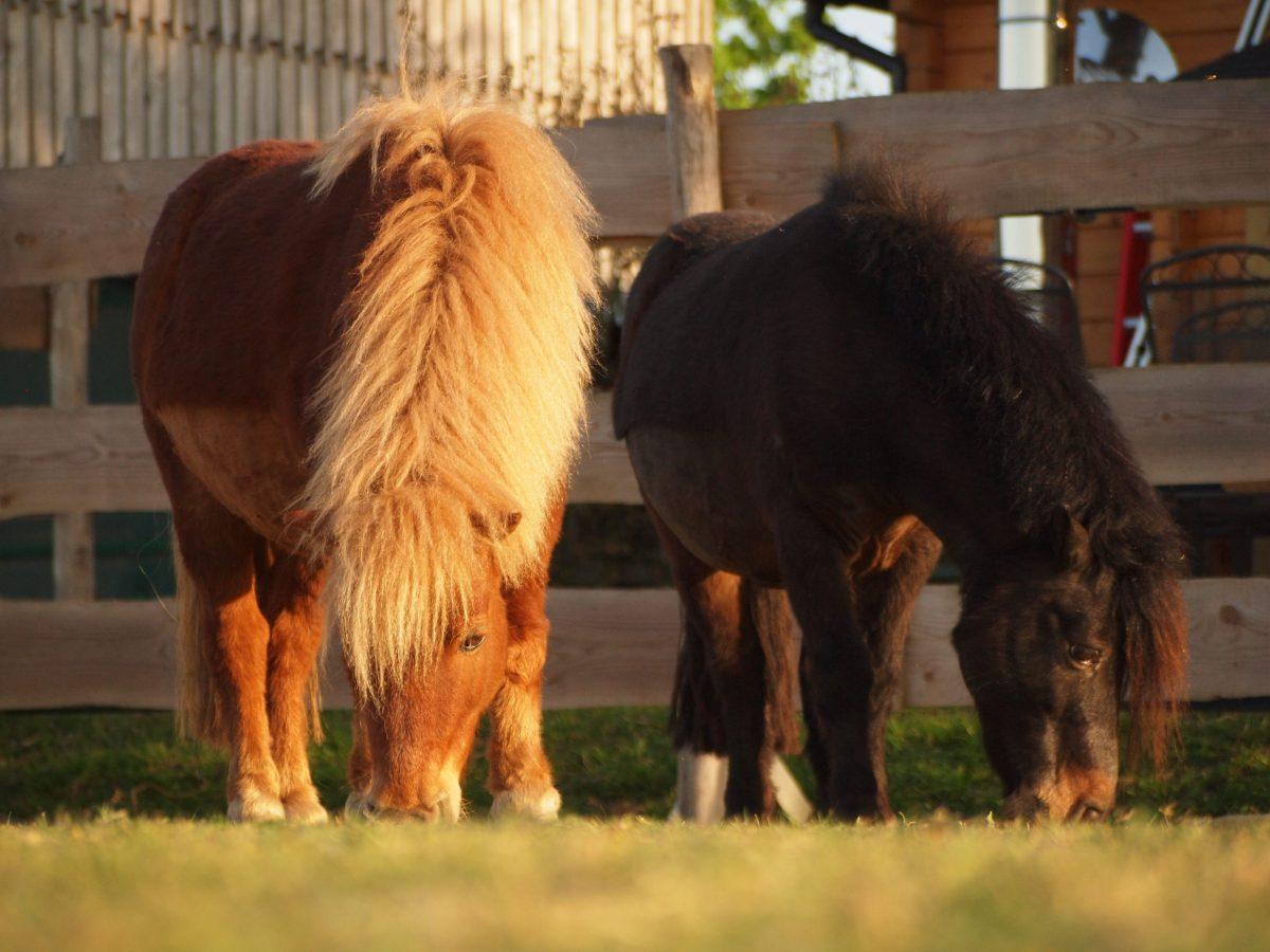 Ponyzwerge Ponyschule Reitpädagogik