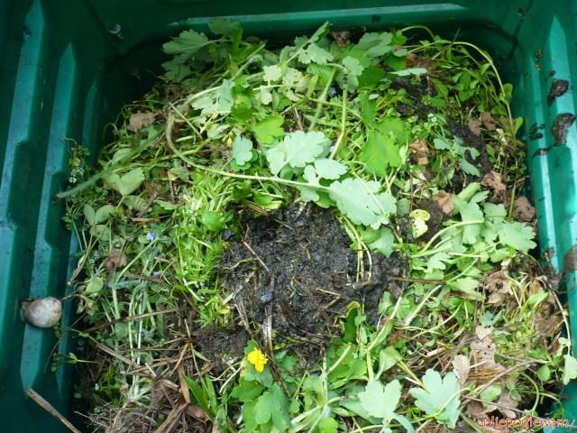 Z gnojówki roszponkowej zostaje mało resztek. Togłównie ziemia, którabyła nakorzeniach. Ślimaki ich nielubią. Fot.Niepodlewam