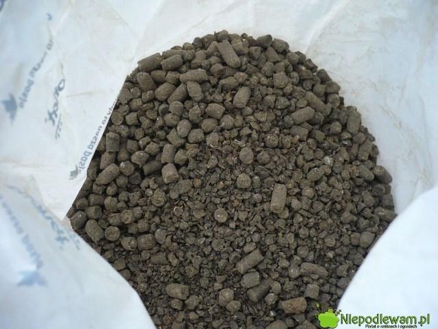 Guano granulowane wpostacie gotowego nawozu. Fot.Niepodlewam