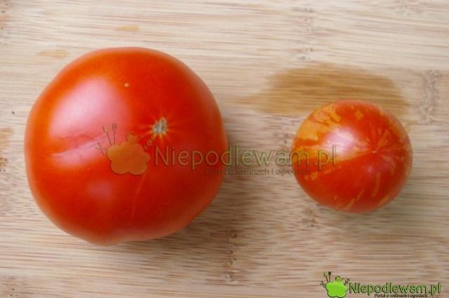 Porównanie wielkości pomidorów: większy toMalinowy Olbrzym, amniejszy - Tigerella. Fot.Niepodlewam