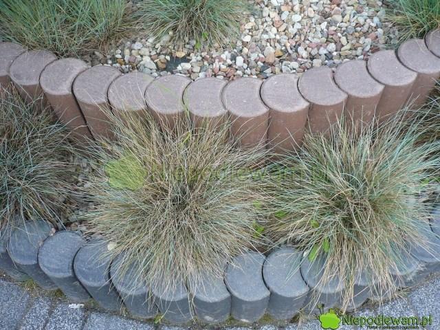 Betonowa palisada ogrodowa wdwóch kolorach. Ścieżka jest zrobiona zgranitu. Fot.Niepodlewam
