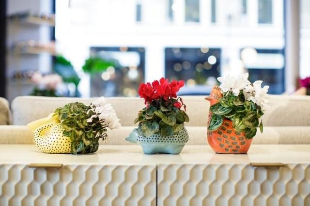 Cyklameny doniczkowe kwitną wokresie zimowym. Są piękną dekoracją mieszkań. Fot.Flower Council of Holland/thejoyofplants.co.uk