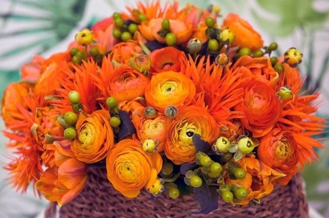 Jaskier azjatycki Elegance Orange