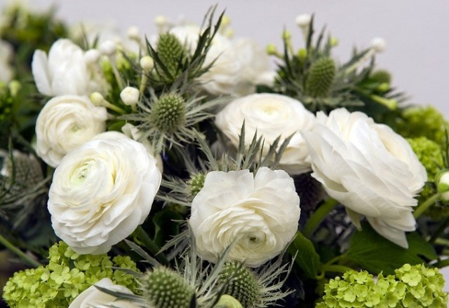 Jaskier azjatycki Elegance White. Fot.iBulb