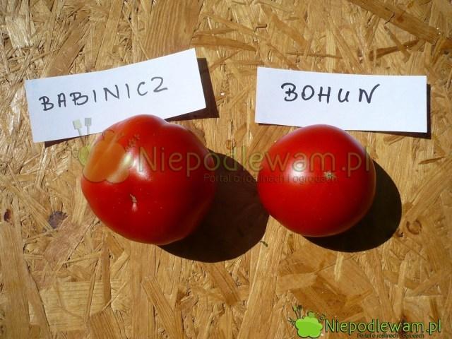 Pomidory Babinicz iBohun. Fot.Niepodlewam