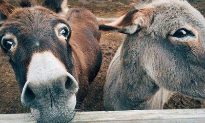 ezels in dierentuin