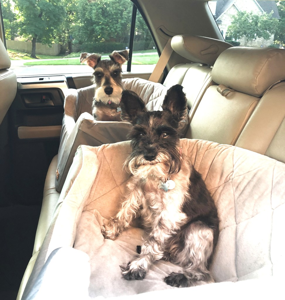 Girls love their puppy car seats.  The large is perfect for them to lay down and have their own space
