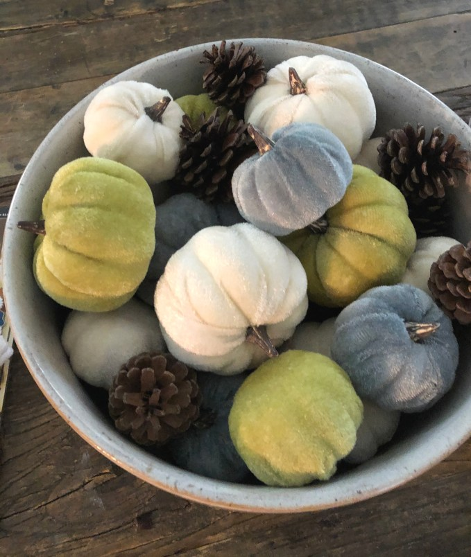 Assortment of pumpkins in velvet texture mix with pinecones