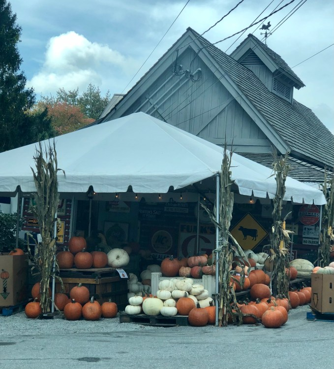 Need pumpkins? They have them in all shapes, sizes, and colors.