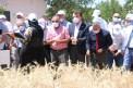 Yeni geliştirilen hububat tohumları çiftçilere tanıtıldı