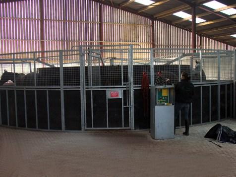 On the horse walker at Nigel Hawke's Thorne Farm Racing