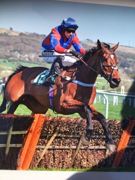 Rejaah winning at Cheltenham