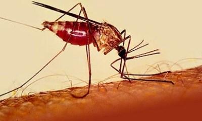 malaria_special.jpg
