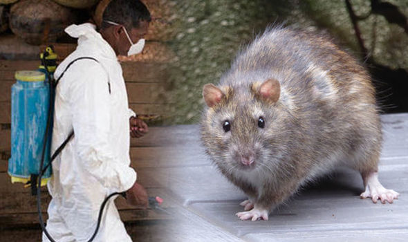 Nigeria records 144 Lassa fever deaths