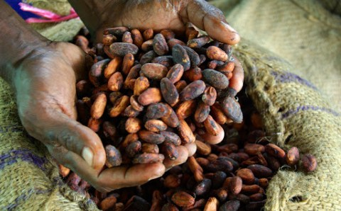 Stakeholders flay government neglect of cocoa export