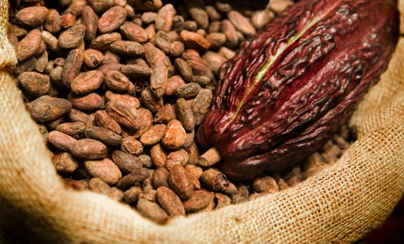 cocoa production in nigeria