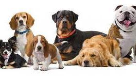 Dog Farming in Nigeria: Step by Step Guide