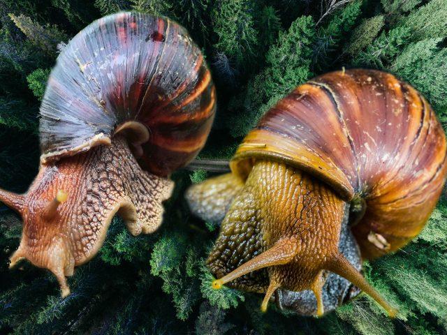 How To Start A Profitable Snail Farming Business In Nigeria - studentmajor.com