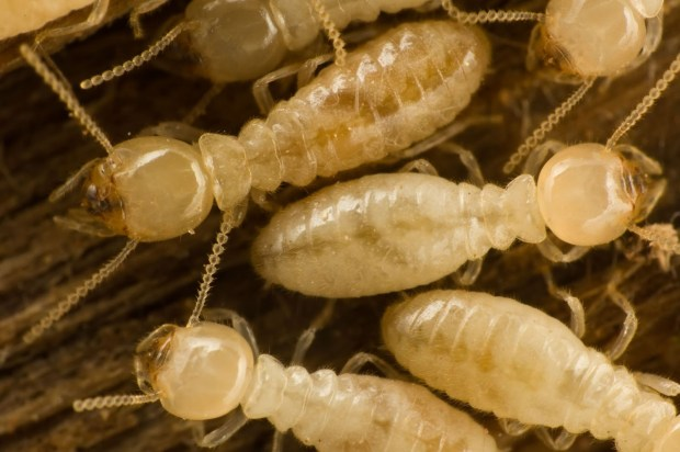 Builders erect structures, termites destroy them