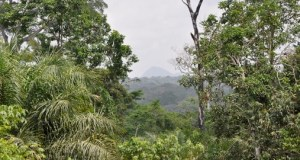 Nigeria Loses 400,000 Hectares Of Forest Annually – Experts