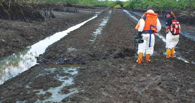Ogoni cleanup: MOSOP accuses Nigeria of insincerity