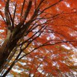 1 thousand leaf<山梨県>