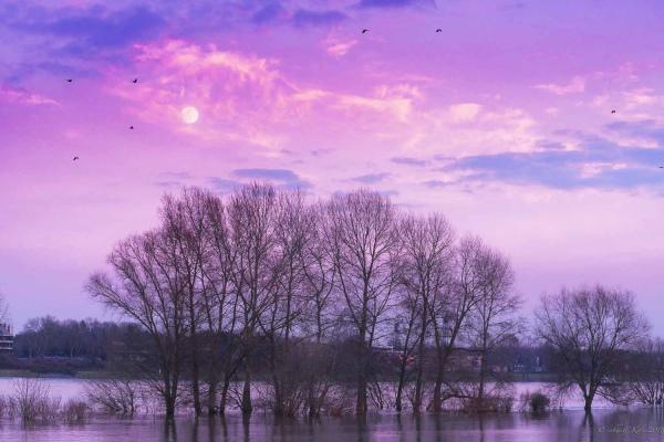 Rheinaue mit Bäumen bei Hochwasser unterm Vollmond