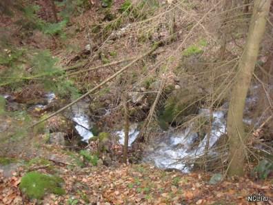 Речка Шумка в лесу