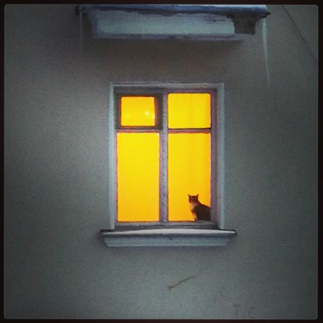 Котейка классический #котейка