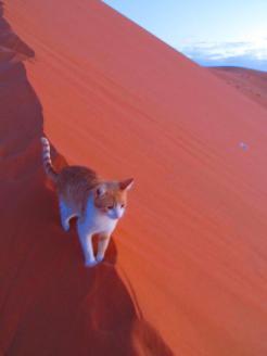 Desert Safari (8)