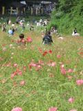 Poppy Sunday (1)
