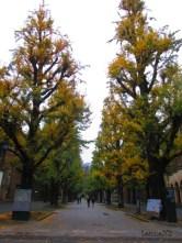 Autumn walk (24)