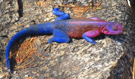 Vibrant Lizard (6)