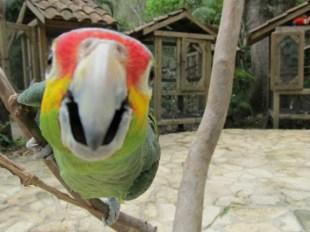 Bird cage doors