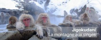 Jigokudani, le parc aux singes