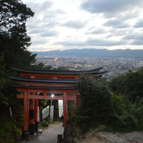 Les torii à Kyoto