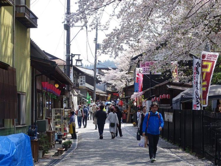 Une rue de cerisiers